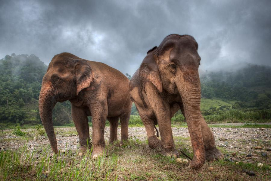 Elephant Nature Park - The Story Of Medo