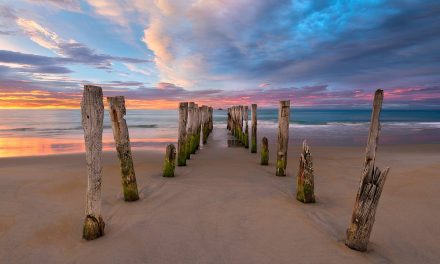 Soft Surrender | St Clair Beach, New Zealand