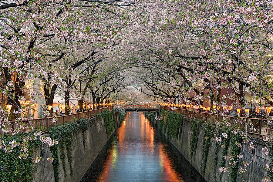 Along The Meguro River | Tokyo