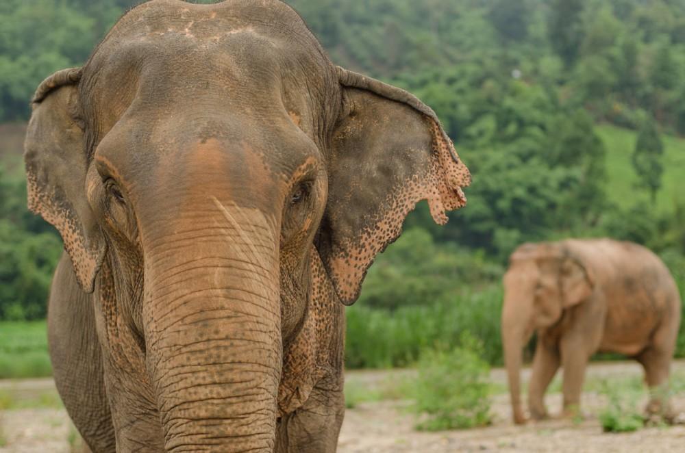 Elephant-image-naomi-closeup