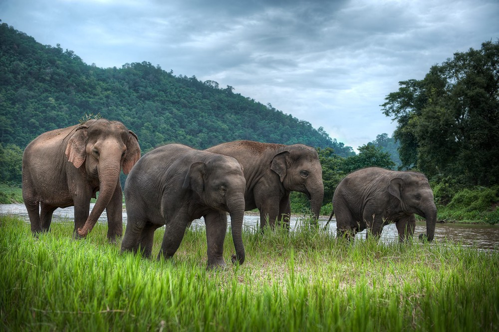 Thailand-Photograpy-Charity-Workshop-Elephant-Nature-Park