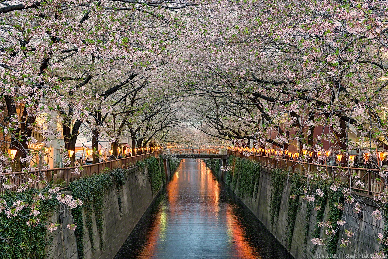 """Along The Meguro River"" | ©2013 Elia Locardi | Tokyo, Japan"