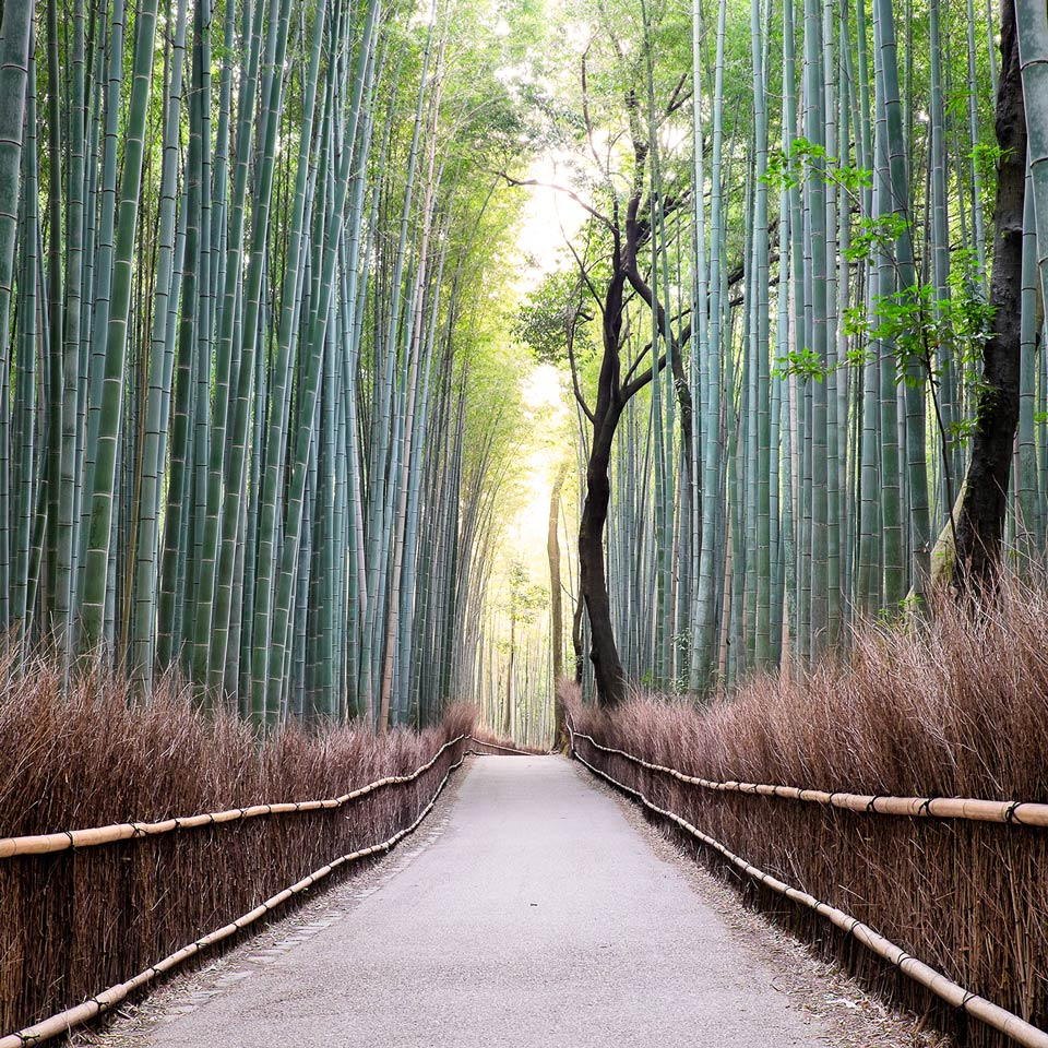 Instagram-Arashiyama-Bambo-Forest-Kyoto-Japan