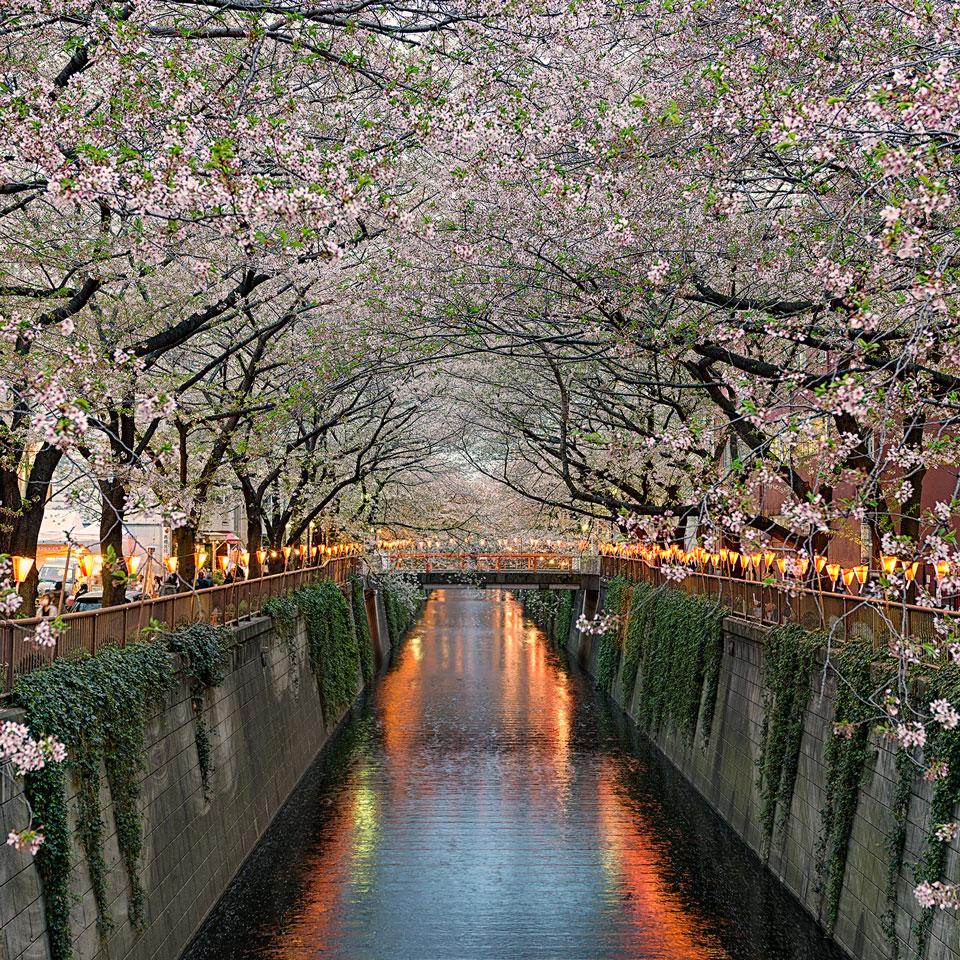 Instagram-Elia-Locardi-Along-The-Meguro-Tokyo-Japan