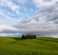 2014-04-05-Tuscany-Group-of-Trees-200