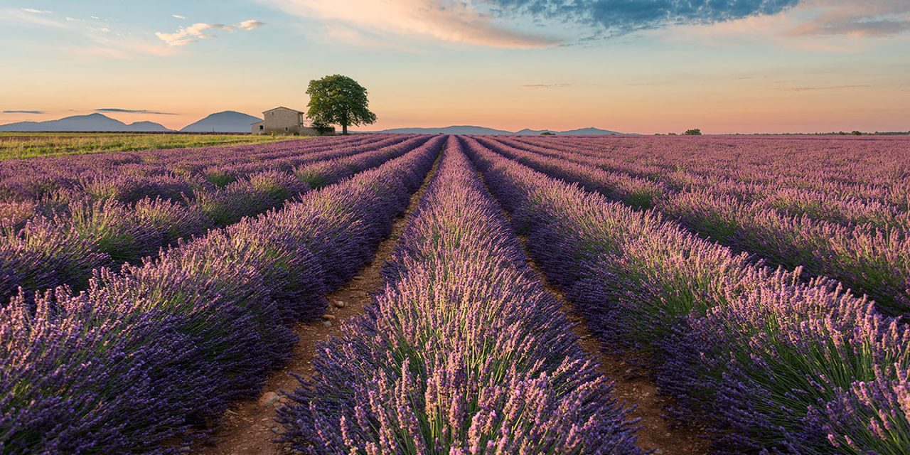 Colors of Valensole | France