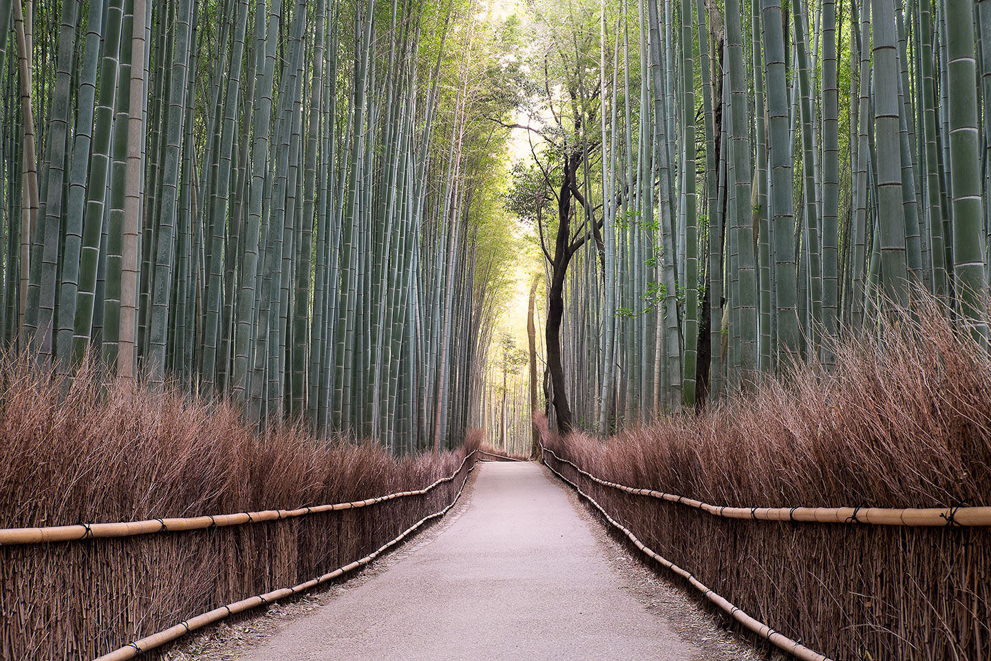 Arashiyama, Japan - March 2014 - Fujifilm X-E2