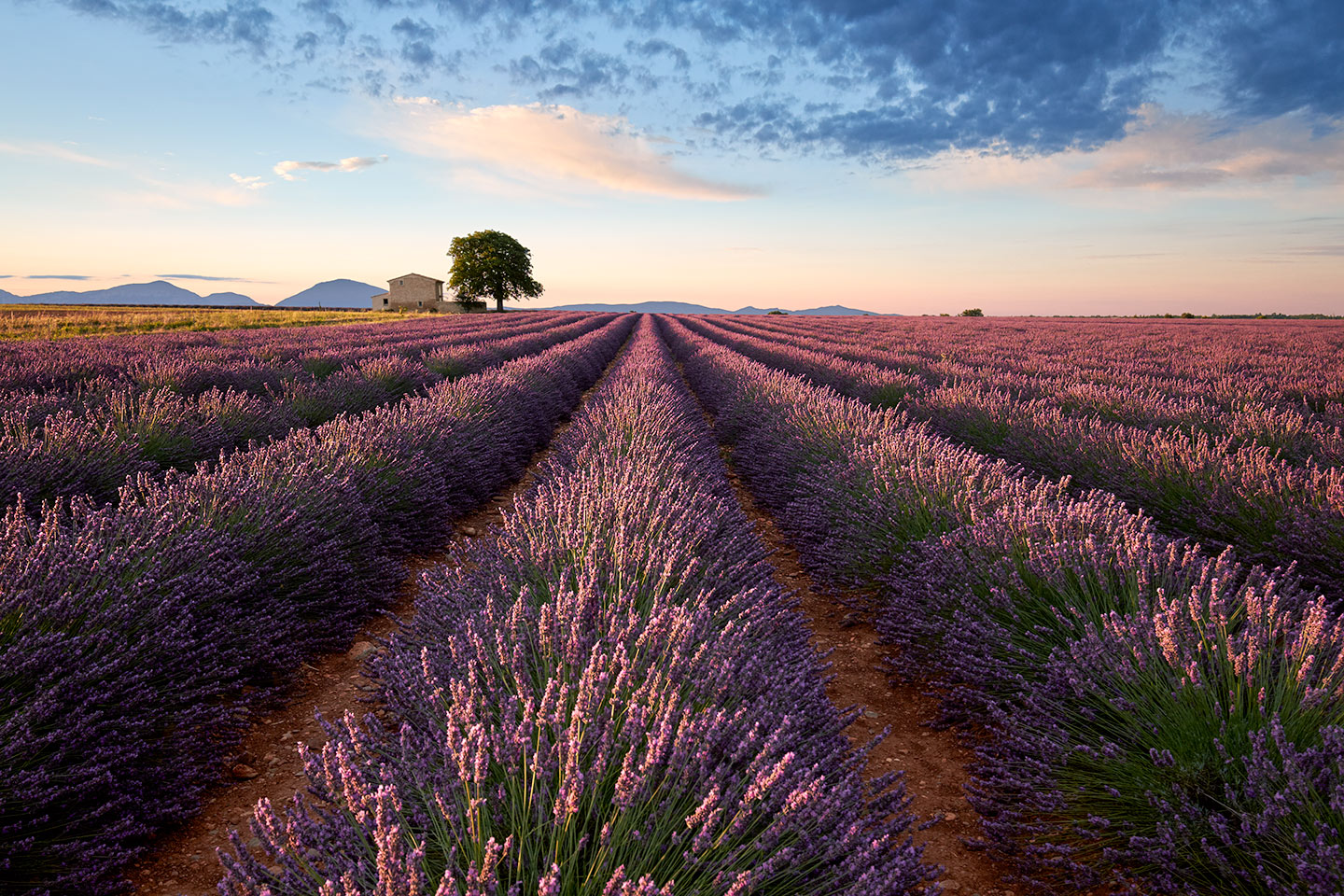 Valensole, France - July 2014 - Fujifilm X-T1