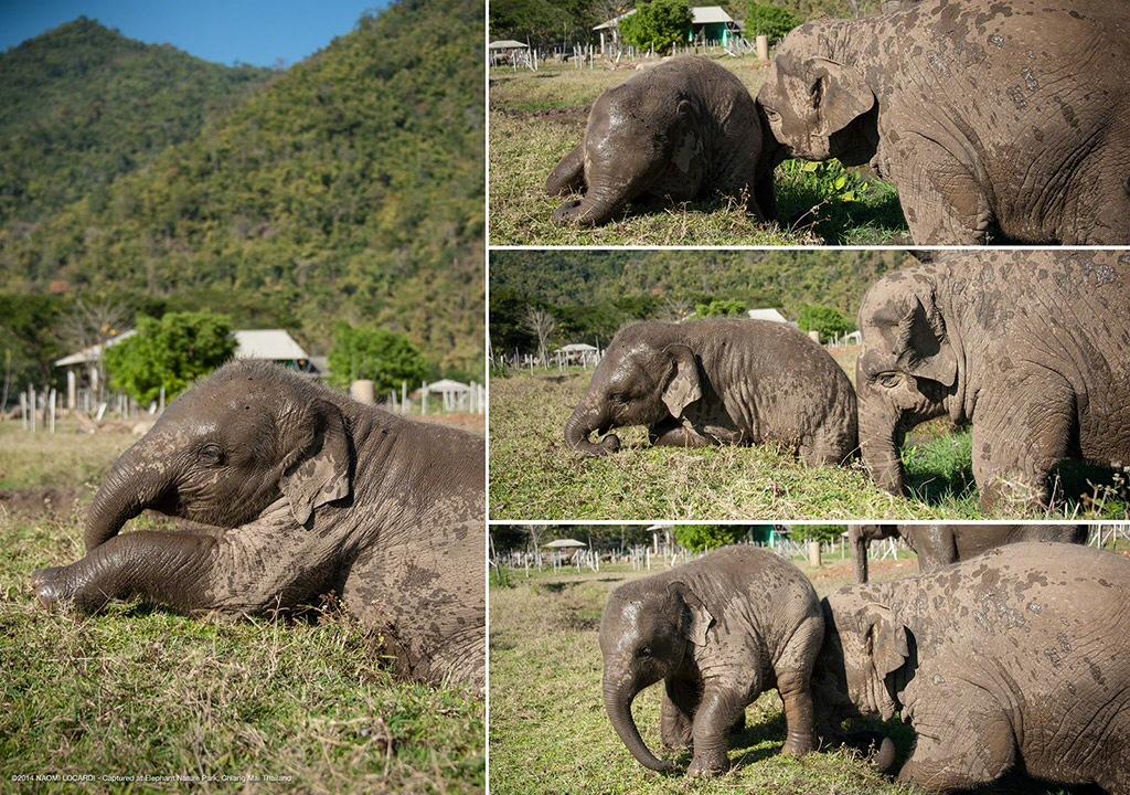 02-ENP-elephant-nanny