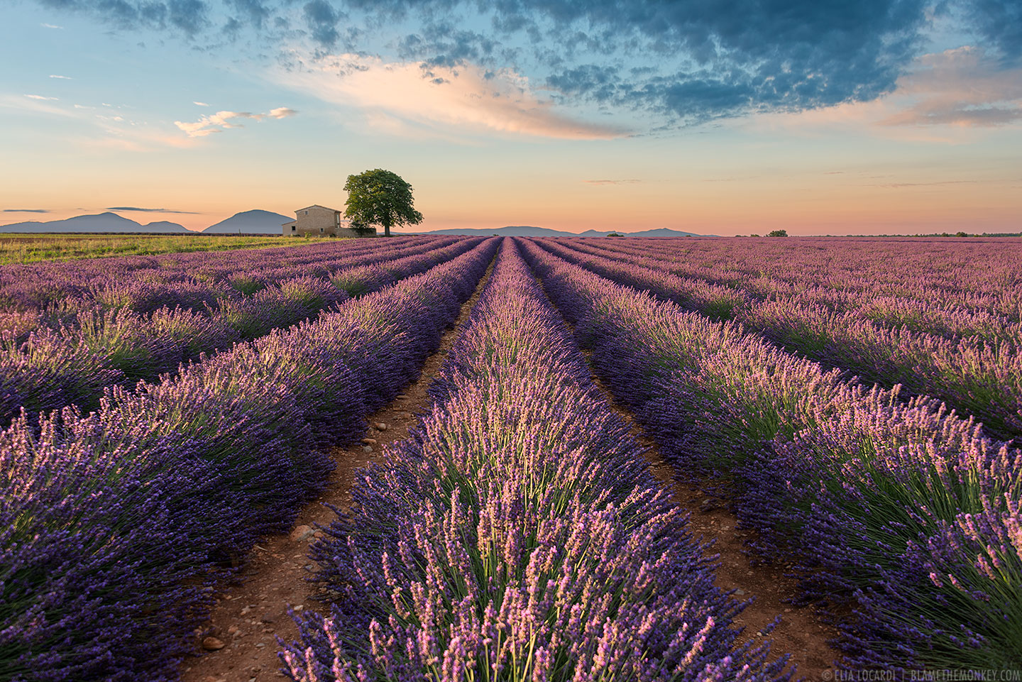 "©2014 Elia Locardi - All Rights Reserved. ""Colors of Valensole"""